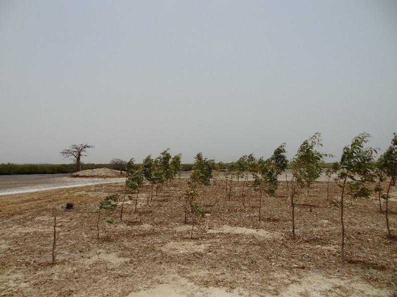 Plantations d'Eucalyptus dans lesquelles des mesures étaient effectuées